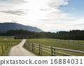 forest, grassland, meadow 16884031