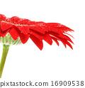 ดอกไม้บาน,เบ่งบาน,บานสะพรั่ง 16909538