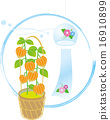 茶蔗子屬 植物人 植物的 16910899