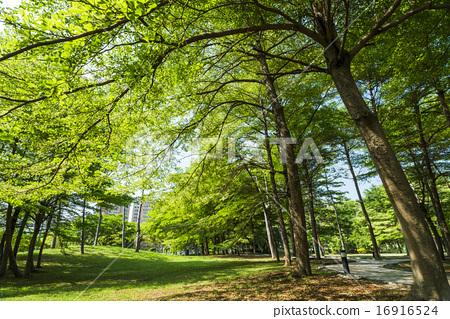 春天的樹林 16916524
