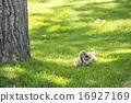 avian, waterfowl, water fowl 16927169