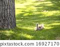hatchling, avian, waterfowl 16927170