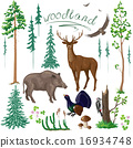 Woodland Plants and Animals Set 16934748