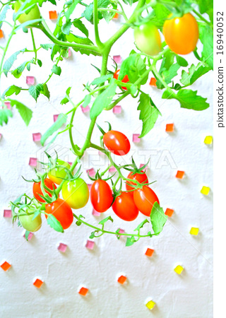수제 토마토 아트 16940052