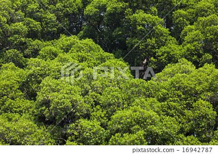 綠色樹葉 16942787