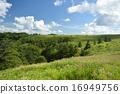forest, meadow, utsukushigahara 16949756