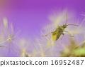 蒲公英和昆虫 16952487