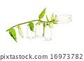 식물, 그림 편지, 수채화 물감 16973782