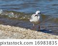Seagull on the beach 16983835
