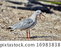Seagull on the beach 16983838