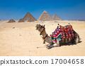 Giza in Cairo, Egypt. 17004658