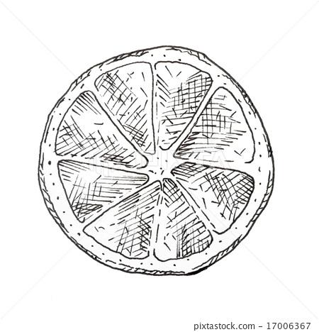 Hand drawn lemon slice ink sketch 17006367