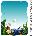 Fish underwater 17020106
