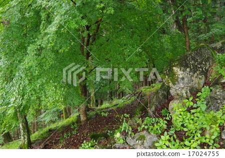 natural environment 17024755