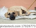 Homeless dog lying on the ground 17026773