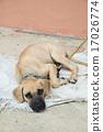 Homeless dog lying on the ground 17026774