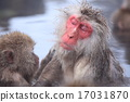 온천에 들어가 휴식 스노우 몽키 나가노 현 야마노우치 정지고 쿠 다니 야생 원숭이 公苑 17031870
