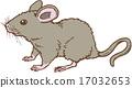 쥐 17032653