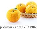 柑桔類 柚子(小柑橘類水果) 水果 17033987