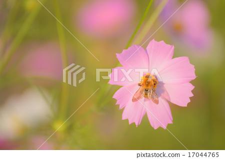 A bee 17044765