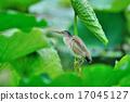 野生鳥類 野鳥 安慰 17045127