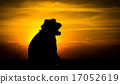 Silhouette of a monkey in sunset 17052619