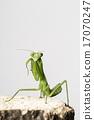 螳螂 螳 昆蟲 17070247