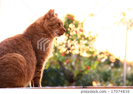 도둑 고양이 용감한 차 호랑이 17074816
