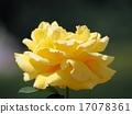 Gina Rollo Brigitta Rose 17078361