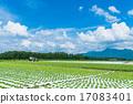 夏季田园风光【长野县·Nobeyama高原】 17083401