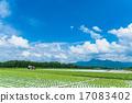 夏季田园风光【长野县·Nobeyama高原】 17083402