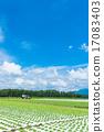 夏季田园风光【长野县·Nobeyama高原】 17083403