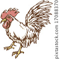 Rooster 17088370