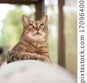 고양이 17096400