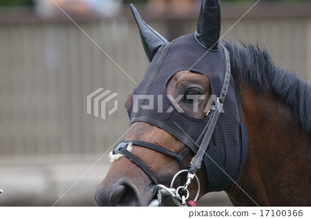 Horse's face 17100366
