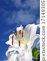흰색, 푸른, 하늘 17149305