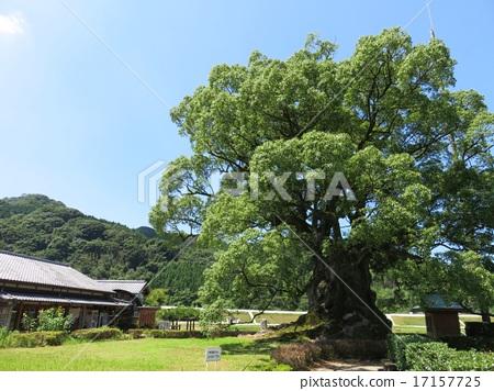 Ogasu of Kawabo (Takeo City) 17157725