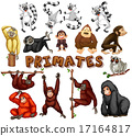 Different kind of primates 17164817