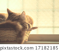 Drowsy with a basket 17182185