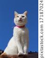 貓 小貓 藍天 17187024