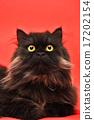 Black Cat 17202154