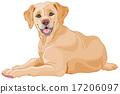 Labrador 17206097
