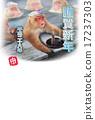 japanese, monkey, hot 17237303