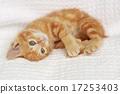 小貓 漂亮 動物 17253403