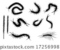 black silhouette centipede in flat icon style. 17256998