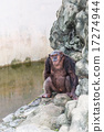 chimpanzee sitting on the rock beside the pool. 17274944
