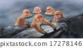 japanese, monkey, monkeys 17278146