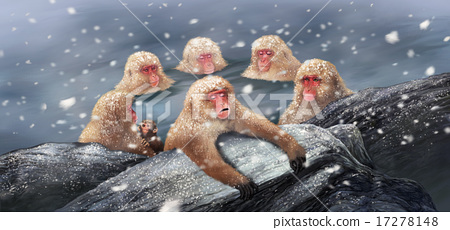 Japanese monkey entering the hot spring and wearing snow 17278148