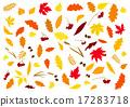 秋天 枫树 枫叶 17283718