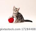 小貓 貓 貓咪 17284488